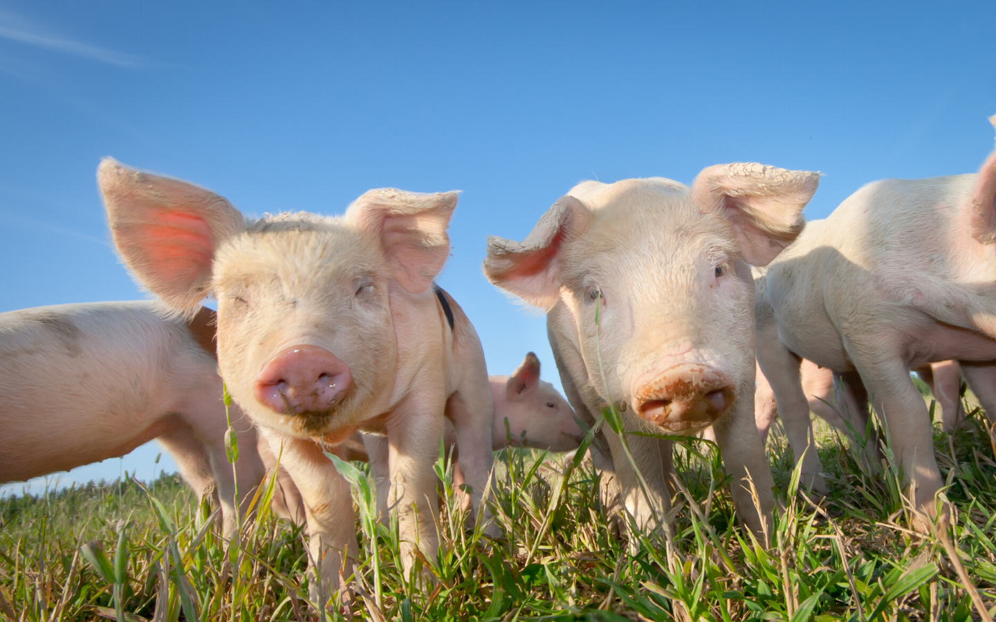 2019 Midwest Swine Nutrition Conference Notes (Part 1)