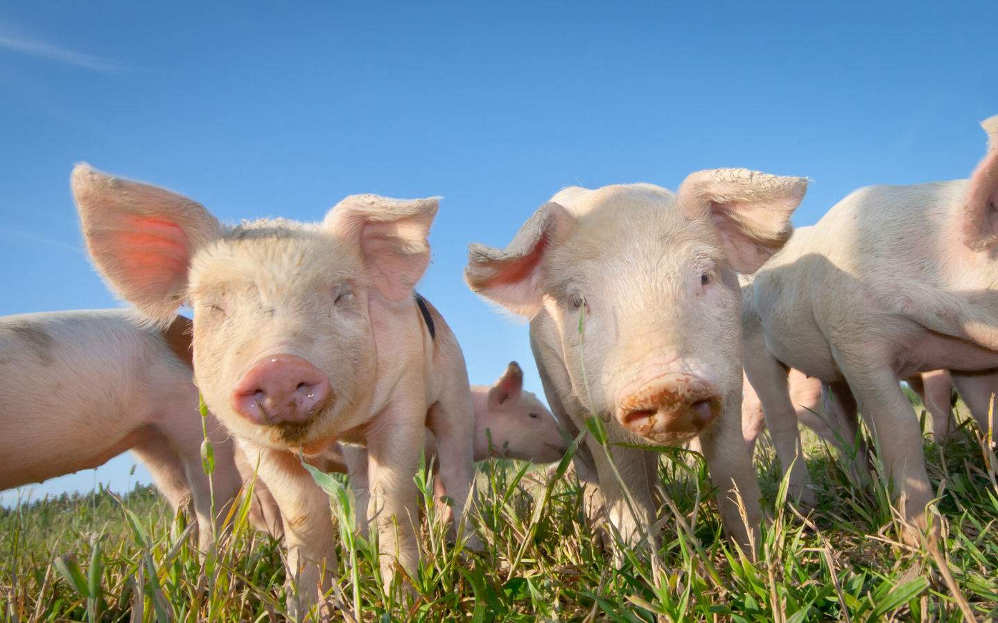 2019 Midwest Swine Nutrition Conference Notes (Part 2)