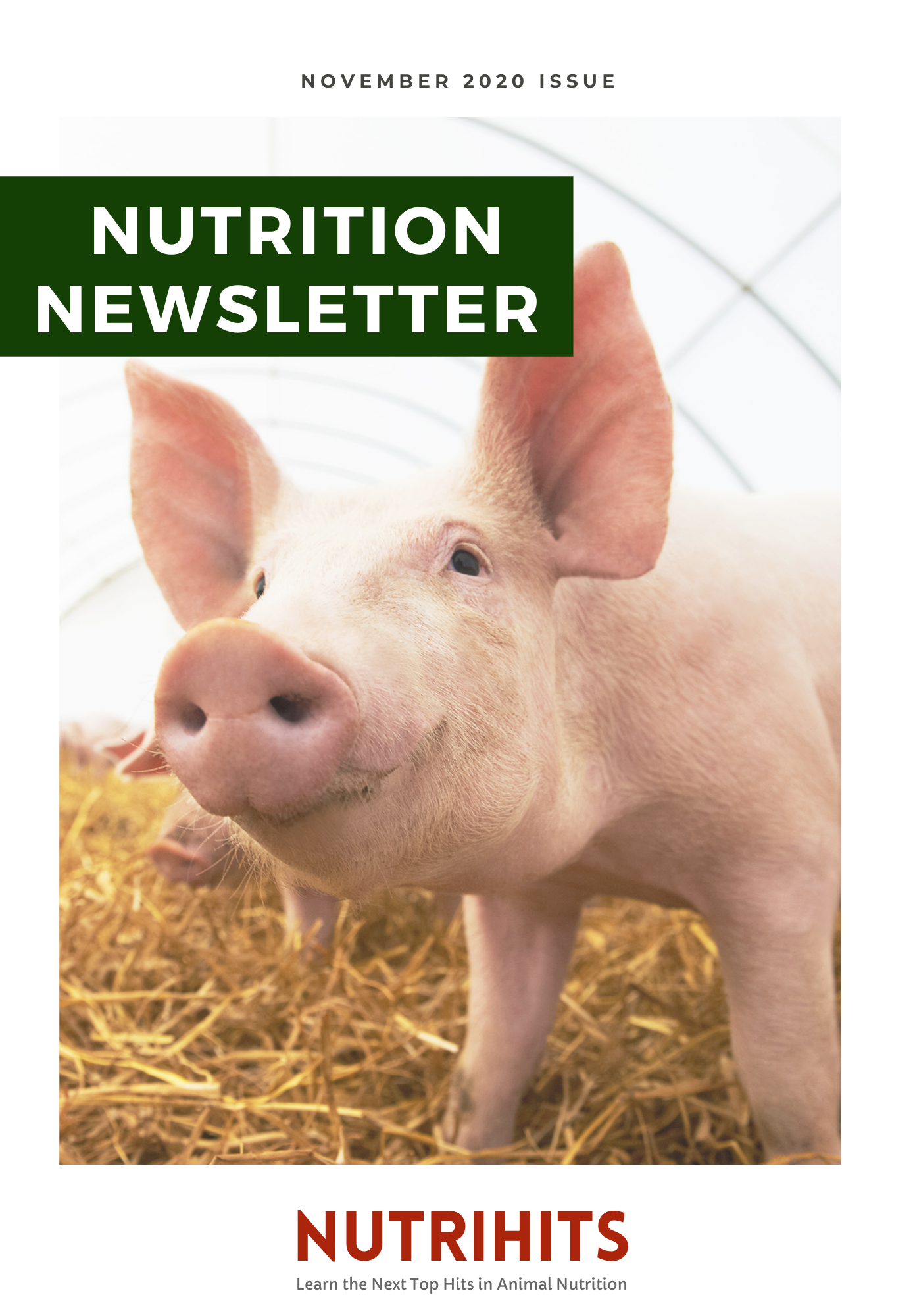 Nutrition Newsletter - November 2020